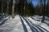 Vstop v gozd