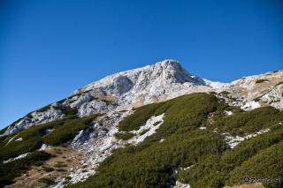 Debeli vrh