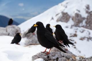 Ptičja družba na vrhu