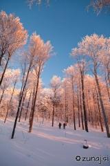 Jutranje sonce osveti drevesa nad nami