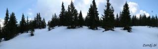 Prihod iz gozda na odprto