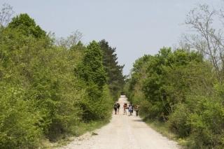 Dolga ravna pot do vasi Basovizza