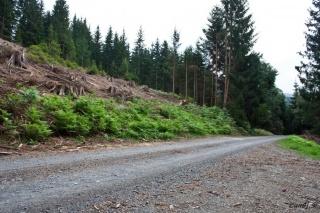 Gozdna cesta