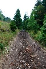 Blatna gozna pot na Tolsti vrh