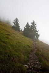 Prihod iz gozda na pešpot