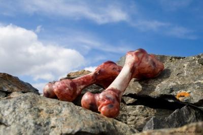 Le kaj delajo kosti na vrhu gore?!