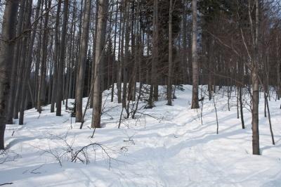 Vhod v gozd