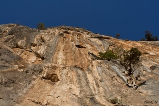 Rumena skala