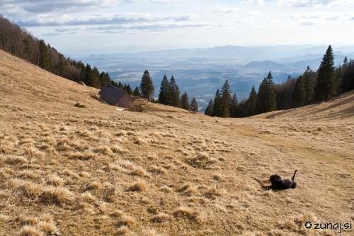 Miši in koča na vrhu Velike Poljane