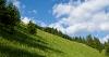 Prihod na travnik