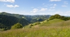 Travniki in gozdovi na Osolniku