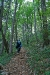 Vzpon po gozdu