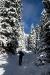 V gozdu je polno snega