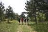Lep sprehod po gozdnih poteh