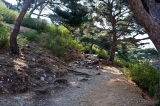 Sprehod po dišečem gozdu