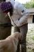 Tale pes je skos rinu Viti med noge:)