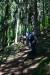 Po hladnem gozdu navzgor