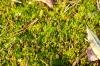 Zelena preproga