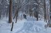 Usmerimo se v gozd