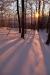 Sončni žarki iščejo svojo pot med vejami