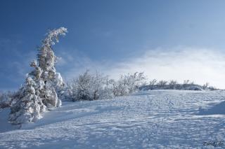V sneg oddana drevesa