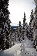 Prvi žarki osvetlijo sneg