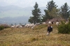 Lidija z ovcami:)
