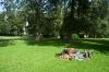 Poležavanje v parku