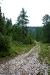 Konec gozdne ceste in začetek vzpona